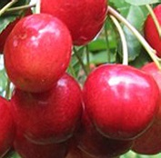 van-cseresznye